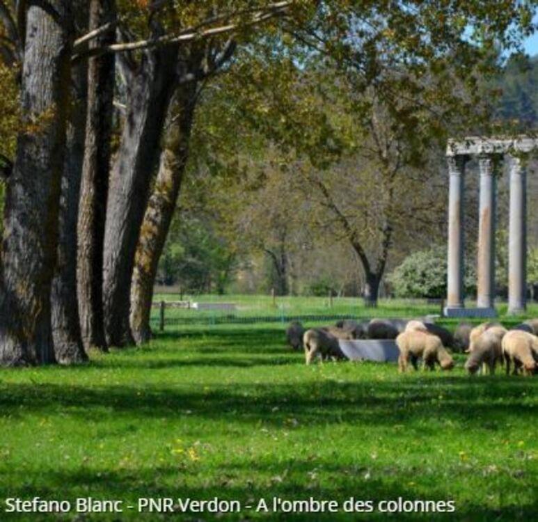 Riez - Les Colonnes Romaines (Randos en FAMILLE, Parc du Verdon)