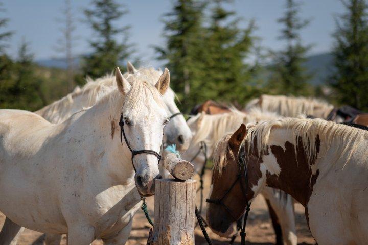 Sur le plateau de Vénascle, au-dessus de Moustiers, les chevaux semblent apprécier l'environnement autant que les cavaliers !