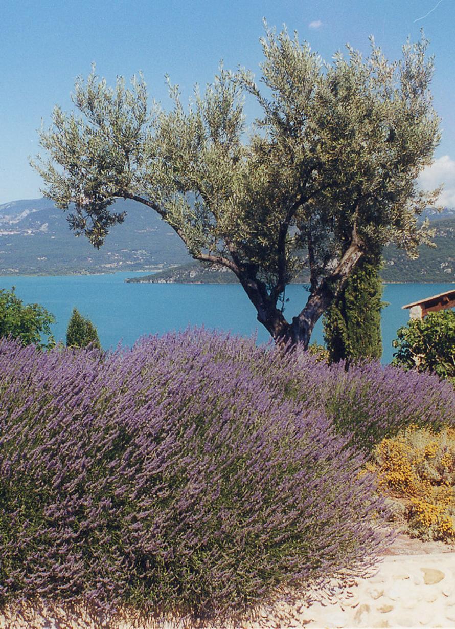 """Un paysage typique de la """"Route des saveurs, des galets et des lavandes"""" de l'UNESCO Géoparc de Haute-Provence"""